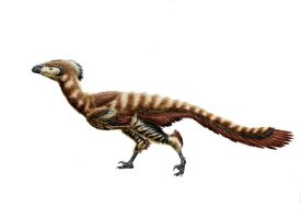 Troodon formosus by Durbed