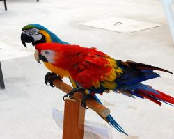Both Parrots by Dominick-AR