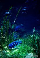 deep blue by SunshadePICTURES
