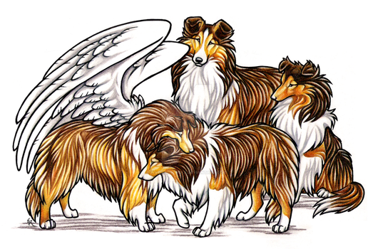 Sheltie Brothers Commission by WildSpiritWolf