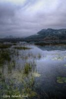Foggy Morning at the Marsh by abstractcamera