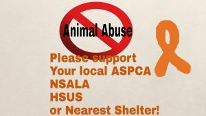 End Animal Abuse! by JGlascock