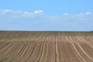 New Crops by Gr8-Gatensby