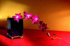 Pink Orchid in Blue Vase 2 by Art-Photo