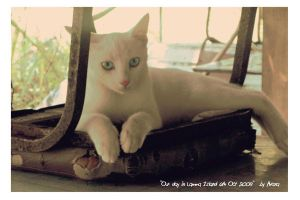 Cat - Lamma Island by without-name