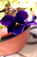 Purple Flower Upclose. by courtsphotography
