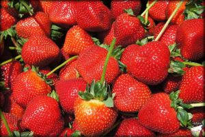strawberries by SF224