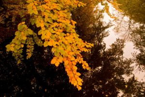 Autumn Leaves by CauterizeSetsFire