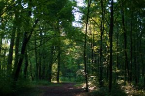 green canopy by tanja1983