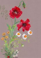 Poppies / Mohn 1 by KarinOhde