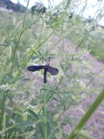 Long-Antennaed Violet Insect by RussianGentleman