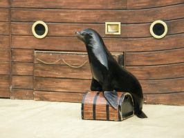 Sea Lion 2 by D-is-for-Duck