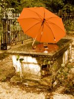 Umbrella and Wine by beverly546