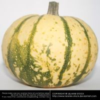 Pumpkin 004 by Lelanie-Stock