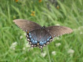 Butterfly 2 of 4 by boxofslavery