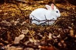 Follow the White Rabbit by alexgphoto