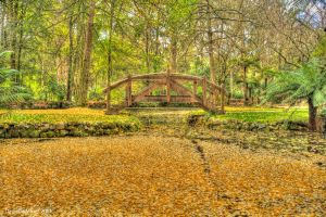 Alfred Nicholas Gardens HDR 3 by DanielleMiner