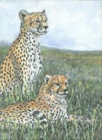 Cheetahs on watch 2 by acrylicwildlife