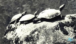 Turtle Family by Fuzzysocks102