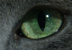 Cat's Pupil by Dragonik