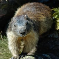 Portrait de Marmotte by Geekylife
