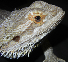 Riza upclose face. by fluffpuffgerbil