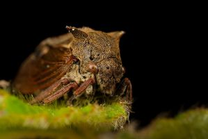 Leaf Hopper 3 by Alliec