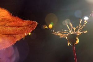 Red leaf and flower by luka567