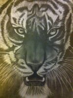 Tiger by MaUsY