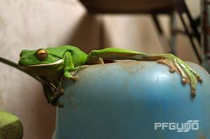 Frog On The Watering Can by pfgun0