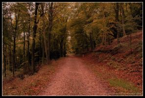 Forestry - Path by Lloyd-Oliver