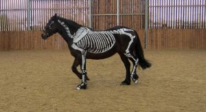 Skeleton horse 2 by Wildflower789