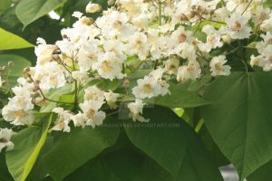 White Flowering Spring Tree Foliage by DanaHaynes