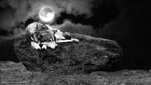 Alone once again - Wolf by firenight617