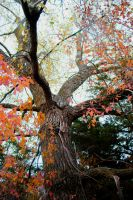 Fall Colours by Ayla142