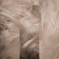 Feather texture - Pack by MD-Arts