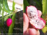 Epiphyllum Fruit by emmil