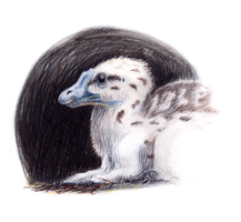 Spinosaurus Chick by francisPapillon
