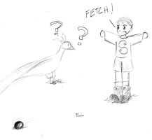 FETCH by Omicheese