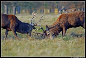 Rutting by andy-j-s