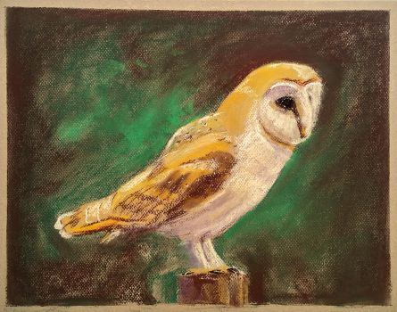 Barn Owl by Brian-van-Hunsel