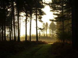 Woodland early morn by davepphotographer
