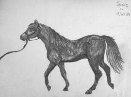 Arabian Horse (Entry) by jackiehorse