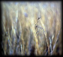 reed by awjay