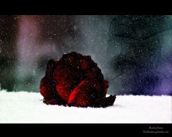 The Ghost of a Rose. by UITUCA