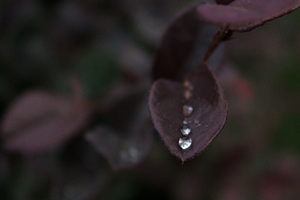 Jeweled Leaf by Daemare