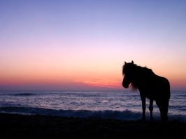 Lone Horse by sailfree