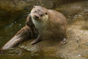 Otter Skansen by Fridooh