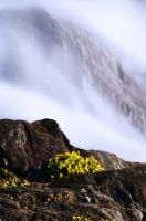 Flowers of the waterfall by knifeofdreams