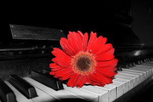 Piano and Flower by PaulCastleton